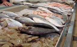 Imports and Exports: How Safe is Seafood From Foreign Sources? - Food Safety News | Aquaculture Products & Marketing Network | Scoop.it