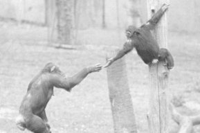 Frans de Waal - the origins of morality - The Science Show | Empathy and Animals | Scoop.it