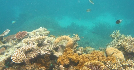 Google Maps Dives Into World Oceans for Underwater Street Views | easytech | Scoop.it