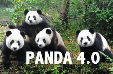 SEO Storm or Light Shower? Google's Panda 4.0 Update | Public Relations & Social Media Insight | Scoop.it