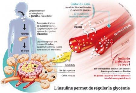 Qu'est-ce que l'INSULINE ? Rôle et origine de cette hormone indispensable au bon fonctionnement de l'organisme !   aaliben   Scoop.it