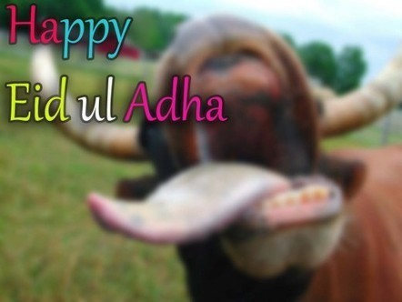 happy eid ul adha wallpaper | Long HD Wallpapers for PC Background | Excellent Pent Coat For Men 2012 | Scoop.it