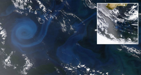 Rapid loss of phytoplankton in the Indian Ocean | Amazing Science | Scoop.it