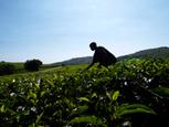 Afrique : Tirer parti du commerce régional pour aider à nourrir un continent   Questions de développement ...   Scoop.it