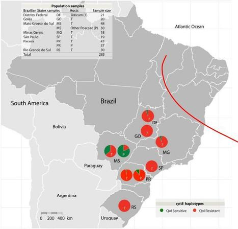 Resistance to QoI fungicides is widespread in Brazilian populations of the wheat blast pathogen Magnaporthe oryzae | Fungicide Hormesis | Scoop.it