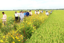Farmers discover the power of flowers - Agriculture - VietNam News | Organic Farming | Scoop.it
