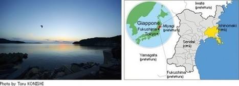 Marzo mese giapponese. A Milano, una mostra per non dimenticare. » A Oriente di dove? | Italia chiama Giappone | Scoop.it