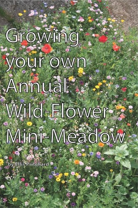 Growing your own Annual Wild-Flower Mini-Meadow Guide | WOWga | Gardening is more than Digging the Dirt | Scoop.it
