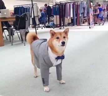 Twitter / DogeKnows: So business Such ... | coworking | Scoop.it