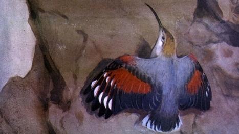 Oiseaux musiciens | DESARTSONNANTS - CRÉATION SONORE ET ENVIRONNEMENT - ENVIRONMENTAL SOUND ART - PAYSAGES ET ECOLOGIE SONORE | Scoop.it