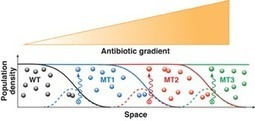 Bacteria Evolve to Go Against the Grain   Social Foraging   Scoop.it
