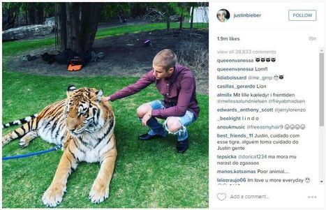 Justin Bieber Poses With Abused Tiger | Nature Animals humankind | Scoop.it