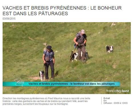 Vaches et brebis pyrénéennes : le bonheur est dans les pâturages - 03-09-2015   Météo à la carte   Vallée d'Aure - Pyrénées   Scoop.it