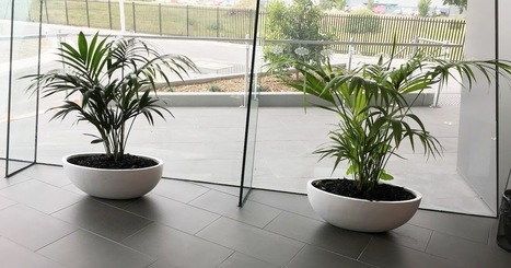 Plant Hire in Melbourne To Bring Vivacity at Your Workplace !! | Foliage Indoor Plant Hire | Scoop.it