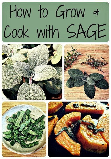 How to Grow and Cook with Sage | From The Herb Cottage | Scoop.it
