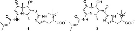 Spithioneines A and B, Two New Bohemamine Derivatives Possessing Ergothioneine Moiety from a Marine-Derived Streptomyces spinoverrucosus   LGN   Scoop.it