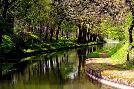 Canal du Midi: la maladie des platanes aux portes de Toulouse - Club Technique - Lagazette.fr | Odyssea : Escales patrimoine phare de la Méditerranée | Scoop.it