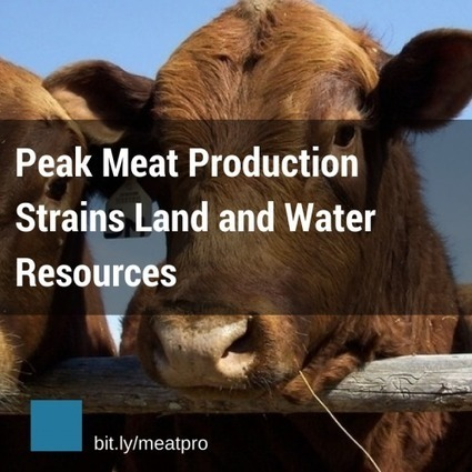 Peak Meat Production Strains Land and Water Resources | Worldwatch Institute | Sustainable Food Future | Scoop.it