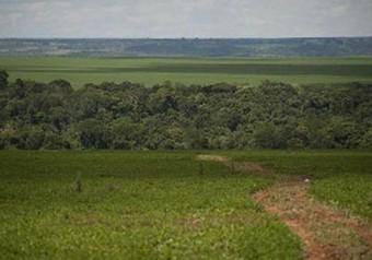 Governo abre consulta sobre impactos de projetos de sustentabilidade   Geoflorestas   Scoop.it