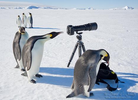 Polar Art Directors | PIXELS | Scoop.it