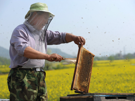 Funny Honey? Bringing Trust To A Sector Full Of Suspicion : NPR | Food issues | Scoop.it
