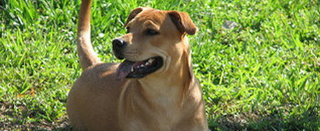 Old Wives' Tales About Dogs: Dispelled | Animal Health | Scoop.it