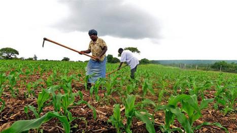 L'Agriculture africaine génèrera 1000 milliards de $ d'ici 2030   Actualité économique et sociale en Afrique sub-saharienne   Scoop.it