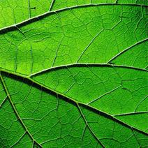 Une protéine végétale pour fabriquer de l'électricité | Sciences & Technology | Scoop.it