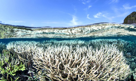 Coral reefs may need more than carbon cuts - Futurity | All about water, the oceans, environmental issues | Scoop.it