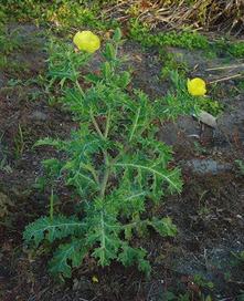 Plantas medicinales de México | Herbolaria | Scoop.it