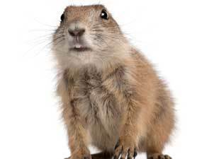 How Long Until We Learn Animal Languages? : Discovery News   Eclectic Mix   Scoop.it