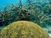 Coral reefs suffering, but collapse not inevitable, researchers say | Vie marine et biodiversité | Scoop.it