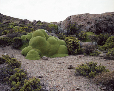 The Oldest Living Things in the World by Rachel Sussman | What Surrounds You | Scoop.it
