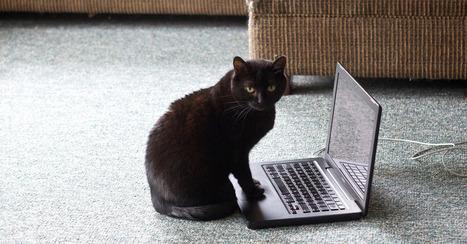 Is Your Website a One-Hit Wonder? | Google News | Scoop.it