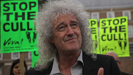 Brian May and Team Badger step up war on 'crazy' cull | Life on Earth | Scoop.it