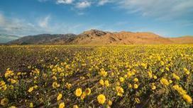 La Vallée de la Mort est en fleurs | AmeriKat | Scoop.it