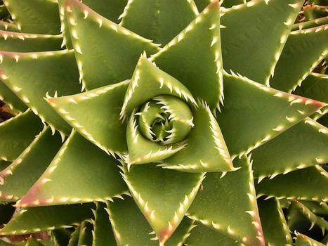El gobierno mexicano quiere prohibir 200 plantas medicinales   Biodiversité et économie   Scoop.it
