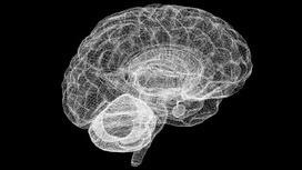 El estado de trance prepara al cerebro para el conocimiento, según ... - Investigación y Desarrollo | Espacios Multiactorales | Scoop.it