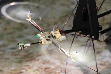Biorobotics-inspired eye stabilizes robot's flight, replaces inertial navigation system | Amazing Science | Scoop.it