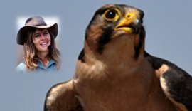 Nikela Volunteer will deliver donation check to save Raptors   Wildlife Conservation: People and Stories   Scoop.it