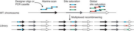 Accelerated protein engineering for chemical biotechnology via homologous recombination | SynBioFromLeukipposInstitute | Scoop.it