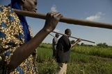 FAO -News Article:FAO welcomes historic commitment to end hunger in Africa by 2025 | naked food | Scoop.it