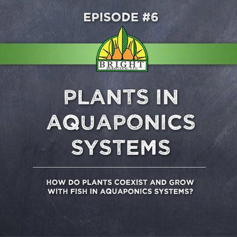 Aquaponics Academy #6: Plants in Aquaponics | Vertical Farm - Food Factory | Scoop.it