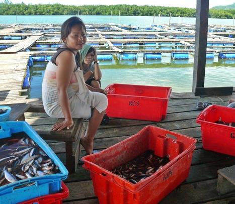 Module 13: Gender in Fisheries and Aquaculture | Aquaponics~Aquaculture~Fish~Food | Scoop.it