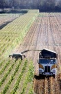 Farming practices threaten widely grown corn crop   Food issues   Scoop.it