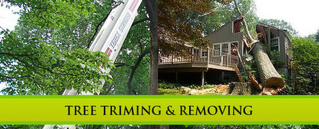 Tree Services Minneapolis MN | environmentally friendly | Scoop.it