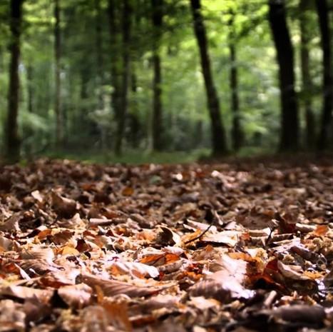 Permaculture : le paillage pour régénérer le sol de nos jardins | pour mon jardin | Scoop.it