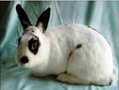Bunny's Blog: Adoptable Rabbits Available at Animal Friends | Pet News | Scoop.it