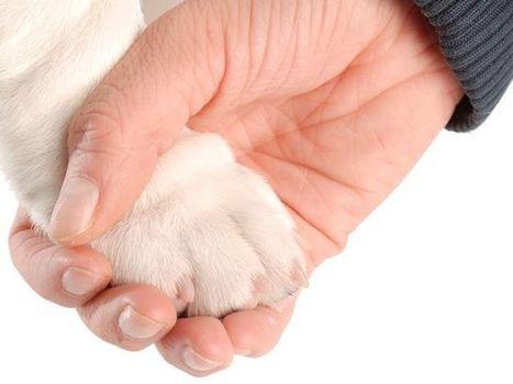 Beneficios de la terapia asistida con perros   I didn't know it was impossible.. and I did it :-) - No sabia que era imposible.. y lo hice :-)   Scoop.it