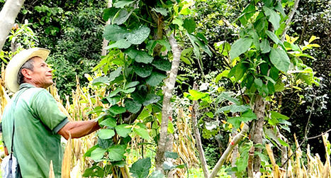 CIAT's agroforestry project on biodiversity and other ecosystem services | GarryRogers Biosphere News | Scoop.it